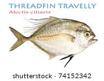 Small photo of Threaffin Travelly - Alectis ciliaris