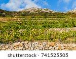 landscape image of vineyard at...   Shutterstock . vector #741525505