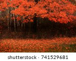 autumn landscape with red ... | Shutterstock . vector #741529681