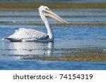 dalmatian pelican on water... | Shutterstock . vector #74154319