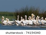 white pelicans colony in danube ... | Shutterstock . vector #74154340