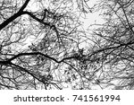 tree branch silhouette on a... | Shutterstock . vector #741561994