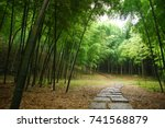 Bamboo Forest Inside A...