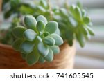 Succulents By The Window In A...