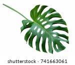 monstera large green leaf ... | Shutterstock . vector #741663061