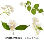 set of jasmin branches with... | Shutterstock . vector #74176711