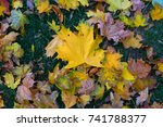 big yellow leaf laying on green ... | Shutterstock . vector #741788377