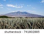 landscape of planting of agave...   Shutterstock . vector #741802885