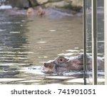 The Cincinnati Zoo S Star...