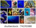 underwater | Shutterstock . vector #74193388