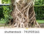 A Big Tree With Root At The...