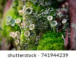 lichen macro photo on a tree | Shutterstock . vector #741944239