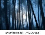 Mysterious Forest On A Full...