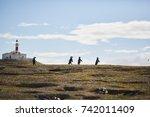 isla magdalena penguin colony   ... | Shutterstock . vector #742011409
