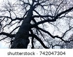a lame dark tree without leaves ... | Shutterstock . vector #742047304