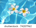 Frangipani Flowers In The...