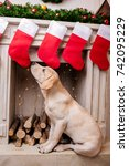 cute labrador retriever dog... | Shutterstock . vector #742095229
