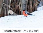 Bullfinch Adult Male  Pyrrhula...