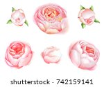 set watercolor roses. botanical ... | Shutterstock . vector #742159141