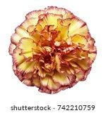 flower yellow red carnation  on ... | Shutterstock . vector #742210759