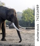 Small photo of big bull elephant African elephant Loxodonta africana