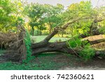 uproot tree falling in the park ... | Shutterstock . vector #742360621