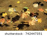 colorful autumn maple leaves... | Shutterstock . vector #742447351