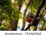 Squirrel Sits On A Tree Branch...
