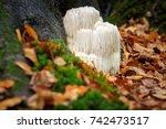 the rare edible lion's mane... | Shutterstock . vector #742473517