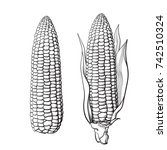 sketch of two corn cobs. with... | Shutterstock .eps vector #742510324