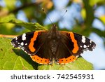 Close Up Of Red Admiral...