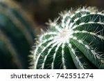 Moody Dark Cactus Macro