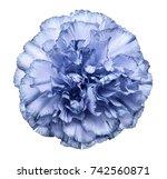 flower light blue  carnation ... | Shutterstock . vector #742560871
