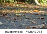 close up of an autumnal path in ... | Shutterstock . vector #742643095