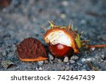 close up of chestnuts in late... | Shutterstock . vector #742647439