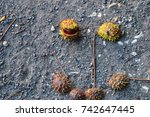 close up of chestnuts in late... | Shutterstock . vector #742647445