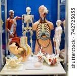 set of medical training dummie... | Shutterstock . vector #742725055