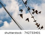 Swallow birds flying away. A small flock of birds takes off from a cable, some are still siting on it. It is a picture out of a sequence.