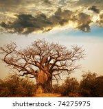 baobab tree | Shutterstock . vector #74275975