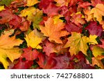 autumn. multicolored maple... | Shutterstock . vector #742768801