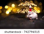 Stock photo cute hamster with santa hat on background with christmas lights 742796515