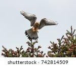 Close Up Photo Of A Bird Of...