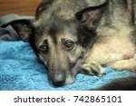 miserable dog | Shutterstock . vector #742865101