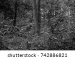 autumn landscapes of the autumn ...   Shutterstock . vector #742886821