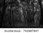 autumn landscapes of the autumn ...   Shutterstock . vector #742887847