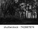 autumn landscapes of the autumn ...   Shutterstock . vector #742887874