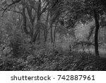 autumn landscapes of the autumn ...   Shutterstock . vector #742887961