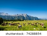 Cows On Pasture In Beautiful...