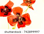 High Key Contrasty Red Poppies...