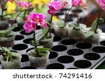 Potted plant orchid - stock photo